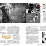 Hundens språk - sid 2