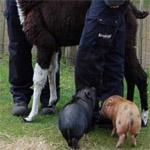 DYN-rapporten 2011 Sällskapsdjursbranschen